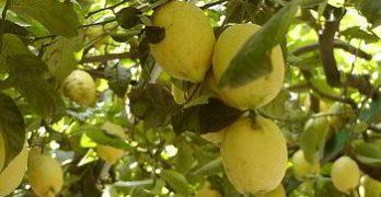Libri sulle piante da frutto