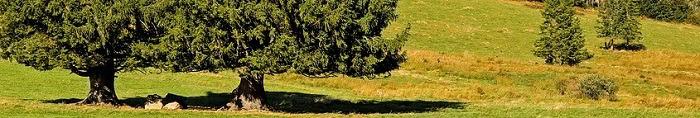 Libri sugli alberi per bambini e non