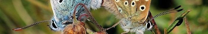 Libri sulle Farfalle italiane
