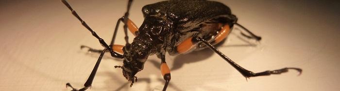 Entomologia forense: libri e manuali